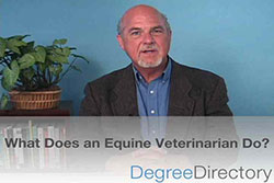 What Does an Equine Veterinarian Do? - Video
