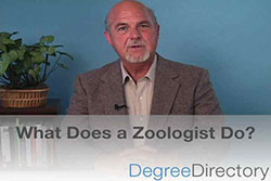 What Does a Zoologist Do? - Video